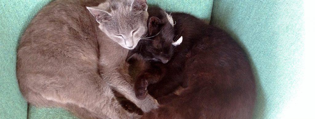 Adopter en kat, test-title