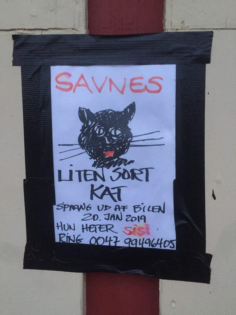 Lille sort kat