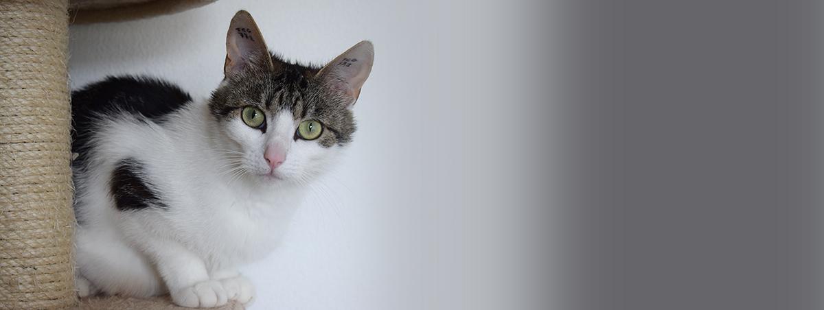 månedens kat